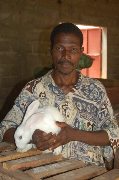 Élevage de lapins